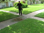 Easy Lawn Care will pick up, bag and remove leaves from your lawn.